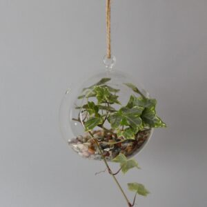 All Glass Terrarium Globe Hanging Bowl Glass Terrarium Bowls