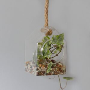 All Glass Terrarium Hanging House on Rope Glass Terrarium Bowls