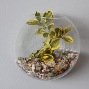 All Glass Terrarium Large Hanging Wall Bowl Glass Terrarium Bowls