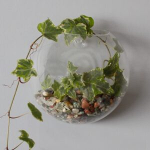 All Glass Terrarium Small Hanging Wall Bowl Glass Terrarium Bowls