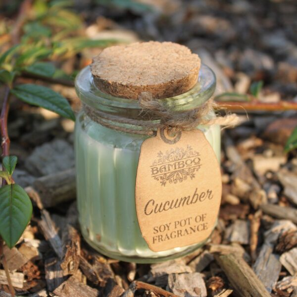 Cucumber Soy Pot of Fragrance Candles Candles