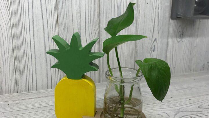 Hydroponic Home Decor Pineapple Pot Hydroponic Home Décor Pots