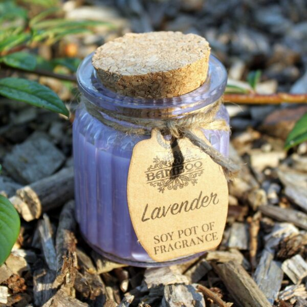 Lavender Soy Pot of Fragrance Candles Candles
